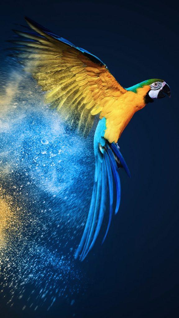 Parrot-wallpaper-11126126