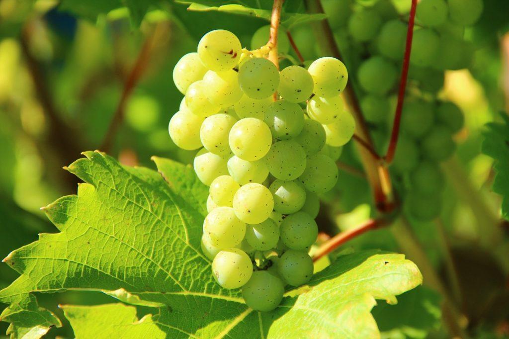 Grapes 276070 1280