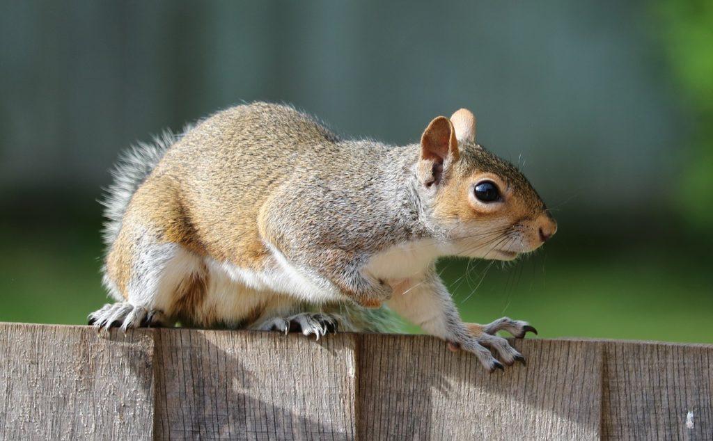 Squirrel 1401509 1280